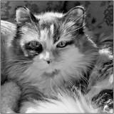 Bari's Beautiful Cat