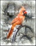 Cardinal by A. D. Jackson, January, 2016