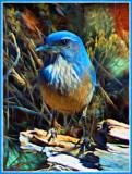 Sedona Blue Bird