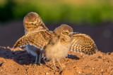 Birds Of The Sonoran Desert