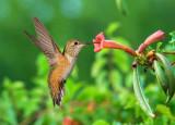 Birds Of Arizona's Verde Valley
