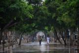 the Prado after the rain