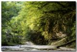 Forêt exubérante vers la cascade de la queue de cheval