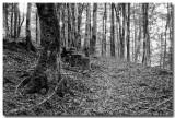Forêt jurassienne