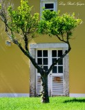 tree and yellow building ,Penha Longa, Linho Portugal