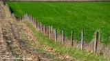 wooden fence, Iowa