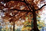 fall foliages, Lake McBride, Solon, Iowa