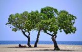 Enjoying the shade, Old Kona Airport State Park, Kailua-Kona, Hawaii