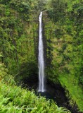 Akaka Falls, Honomu, Big Island, Hawaii