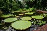 Royal Botanic Garden Lotus Pond Edinburgh UK