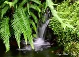 small fern garden Royal Botanic Garden Edinburgh UK