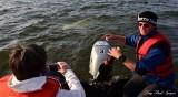 Beluga Whale Churchill River Churchill Canada