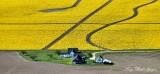 Farm and Daffodils, Mount Vernon, Skagit Valley, Washington State