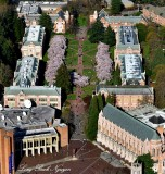 Cherry Blossom, The Quad, Red Square, Suzzallo Library, University of Washington, Seattle