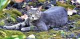 Cat in Paleaku Gardens Peace Sanctuary, Captain Cook, Big Island, Hawaii