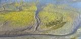 Life in Mud Flat Skagit Valley Washington