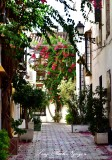 Bougainvillea Street, Marbella, Spain