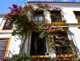 Bougainvillea, Marbella, Spain 173a