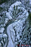 Frozen Trees in Middle Fork Snoqualmie River, Cascade Mountains, WA