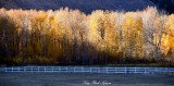 Fall Foliage in Hailey Idaho 2013 127