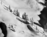 Standing Tall in Deep Snow, Cascade Mountains, Washington 081