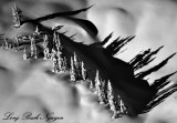 Tall Shadows in the Winter Landscape 827