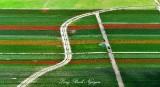 Tulip Field Skagit Valley Mount Vernon Washington 307