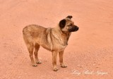 Friendly dog at Thunderbird Mesa Monument Valley Navajo Tribal Park Arizona 760