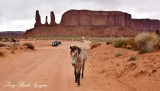 Horse at Three Sisters and John Ford's Point on Monument Valley Scenic Route, Navajo Tribal Park, Arizona 943