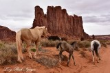 Horses at Elephant Butte Monument Valley Navajo Tribal Park Arizona 945