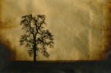 Fine art gold leaf images