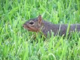 chillin' in the grass