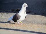 Crazy Bird that hangs around