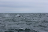 Hump Back Whale Watching