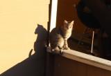Cat Shadow 1-7-17
