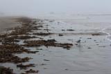 Seaweed Everywhere 1-17-17