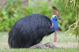 Birds of Australia, Northeastern Queensland, Western Australia and Northern Territory
