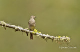 Townsends solitaire-3794.jpg