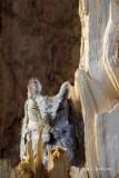 Eastern Screech-owl-4599.jpg