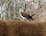Galápagos June 19-26, 2016