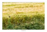 Campos de cereales, señal de que Castilla está cerca