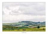 Caminando entre campos de cereales