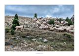07/12/2015 · Ramat d'ovelles, Bel (Baix Maestrat)