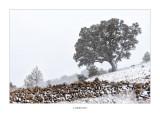 27/02/2016 · Bel, vent, neu i fred