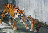 Mama Leanne is trying to show Cub something. #0877