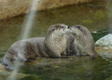 The ever-loving sea otters. mdsc01971