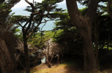 Looking down toward the ocean, through the trees. mImg_5585.jpg