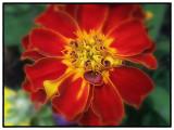 Flower De Toilet