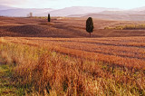 Tuscany In My Heart