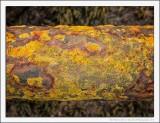 Rust and Lichen